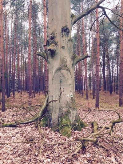 grumpy tree near biogenies