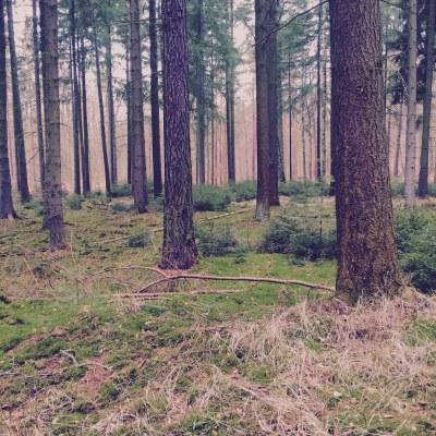 forest Bogensee