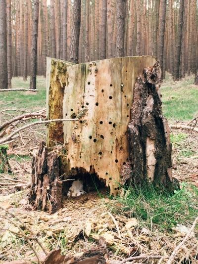 Near Wildenbruch