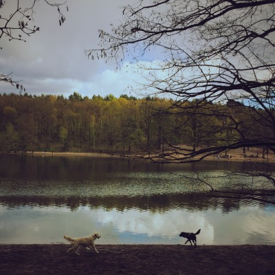 Grunewaldsee dogs