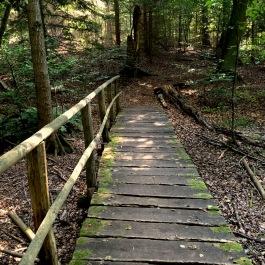 Hiking Wandern Liepnitzssee