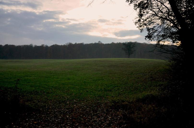 Unesco Naturerbe Grumsin Schorfheide