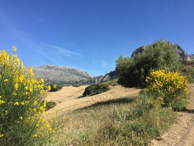 GR 249 Gran Senda de Malaga, Pulgarin Alto – Alfarnate