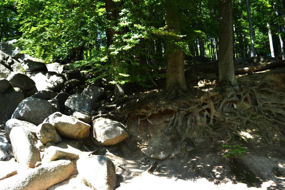 Odenwald Hike: A Sea Of Rocks – The Felsenmeer