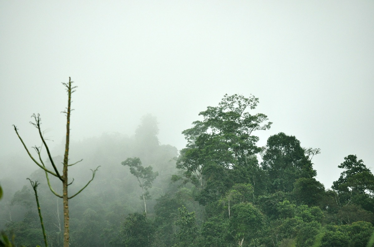 Mindo: A Small, Enchanted Town In The Ecuadorian Cloudforest