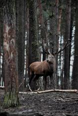 Wandern, hiking, Schorfheide, Tierpark