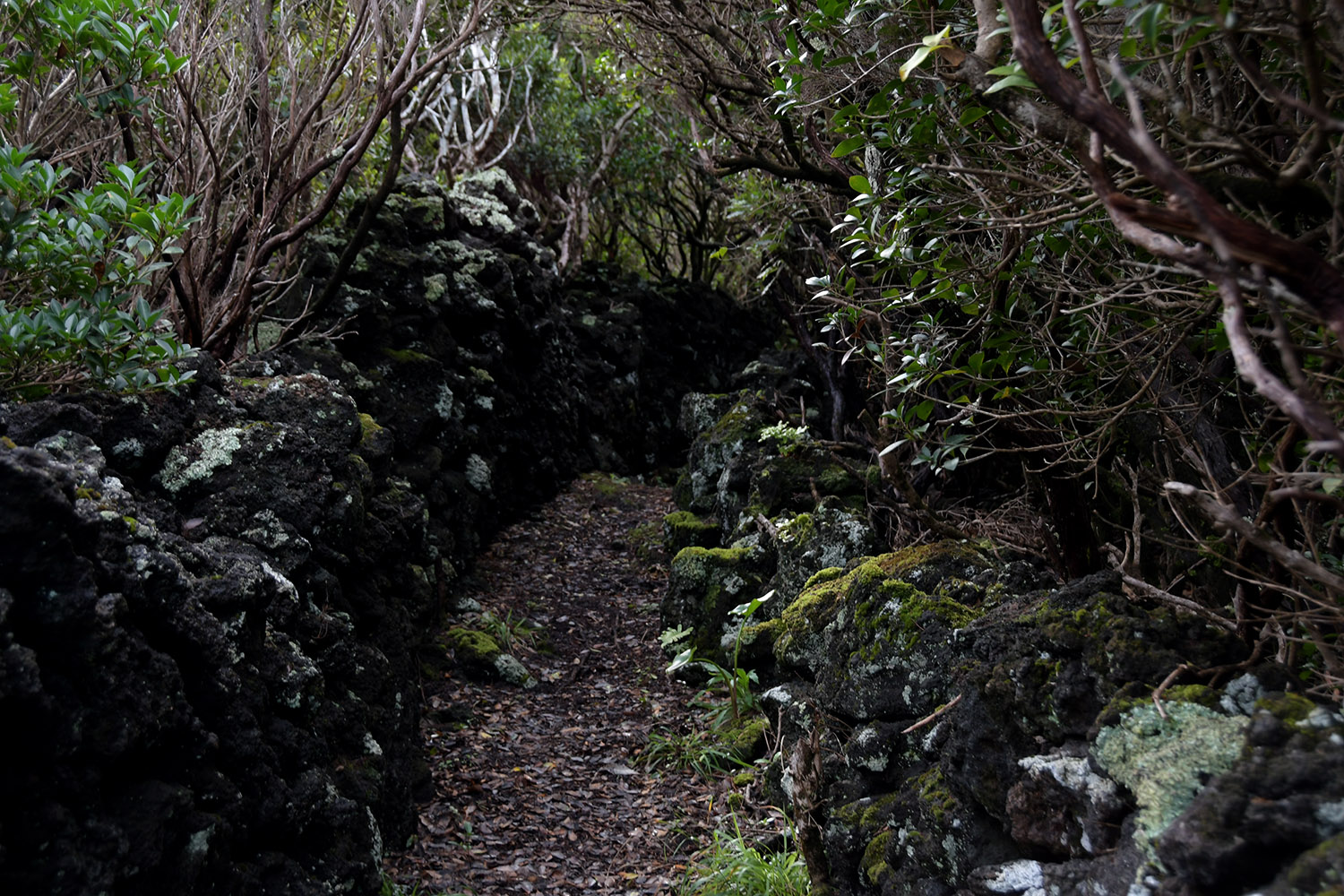 Azores Pico Vineyards Hike_10