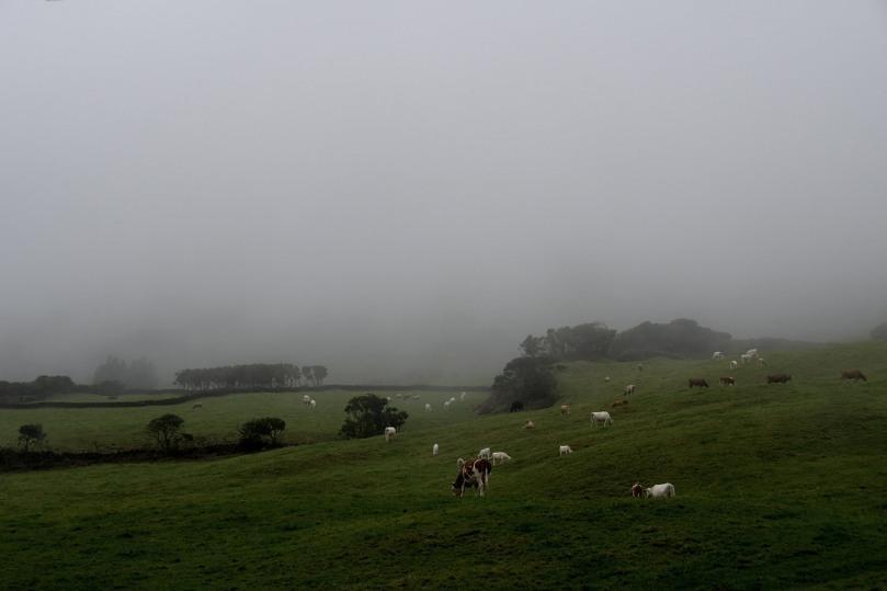 Azores_Pico_Fog_03