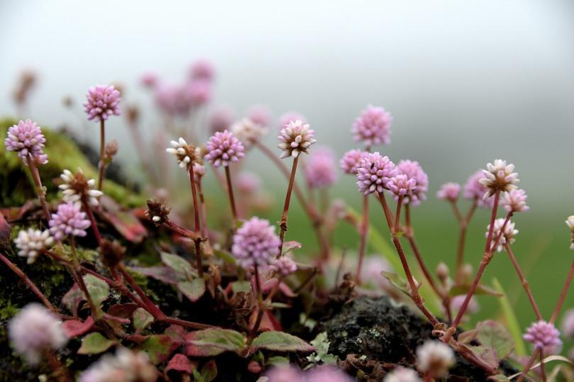 Azores_Pico_Fog_04