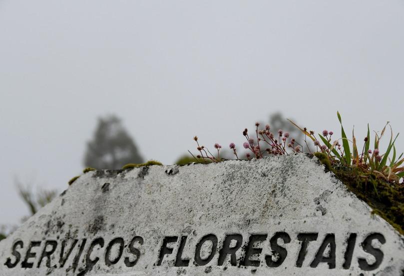 Azores_Pico_Fog_07