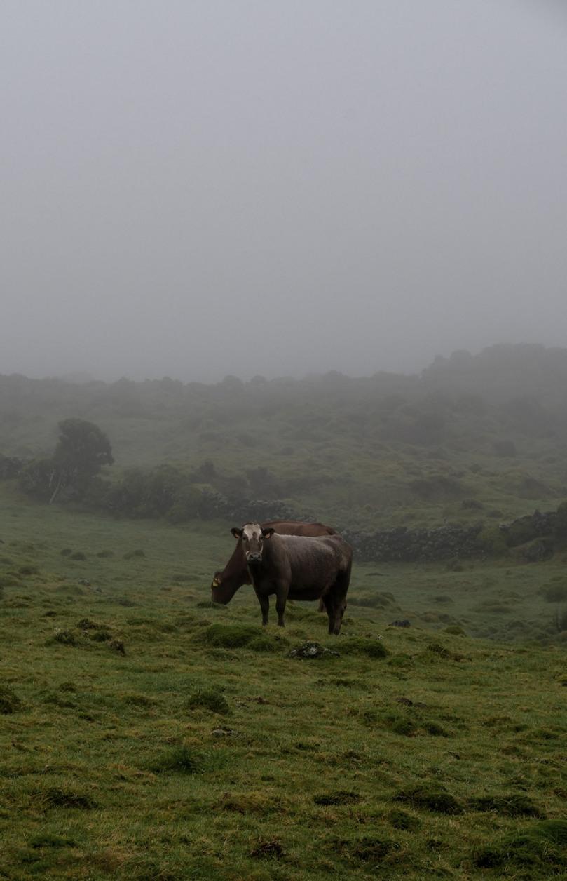 Azores_Pico_Fog_14