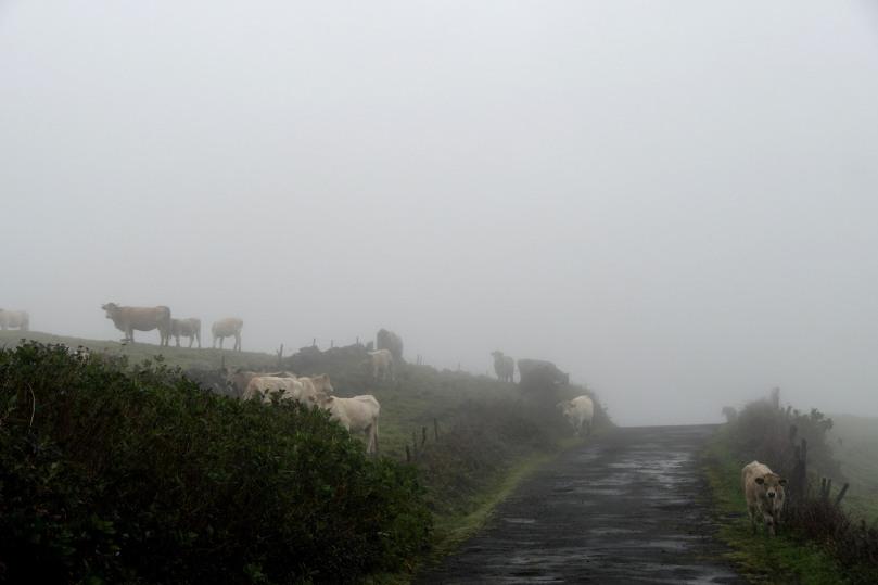 Azores_Pico_Highlands_02