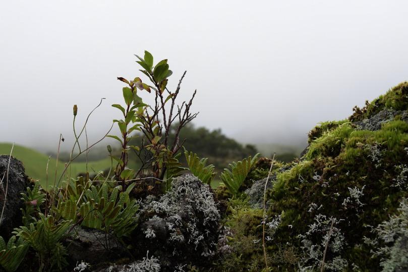 Azores_Pico_Highlands_14