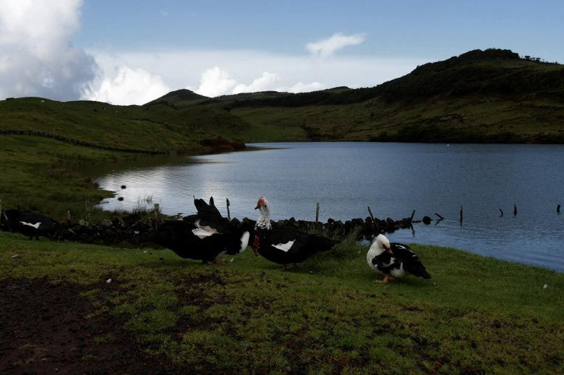 Azores_Pico_Highlands_17
