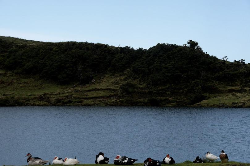 Azores_Pico_Highlands_28