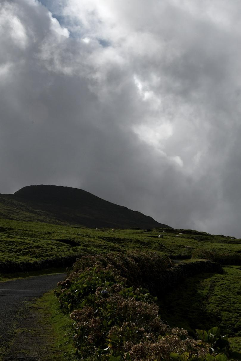 Azores_Pico_Highlands_36