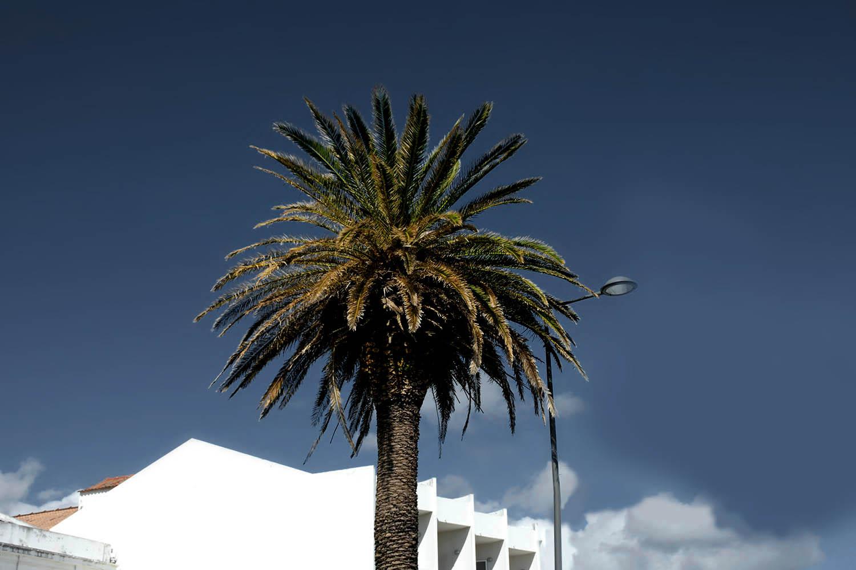 Horta Faial Azores _15