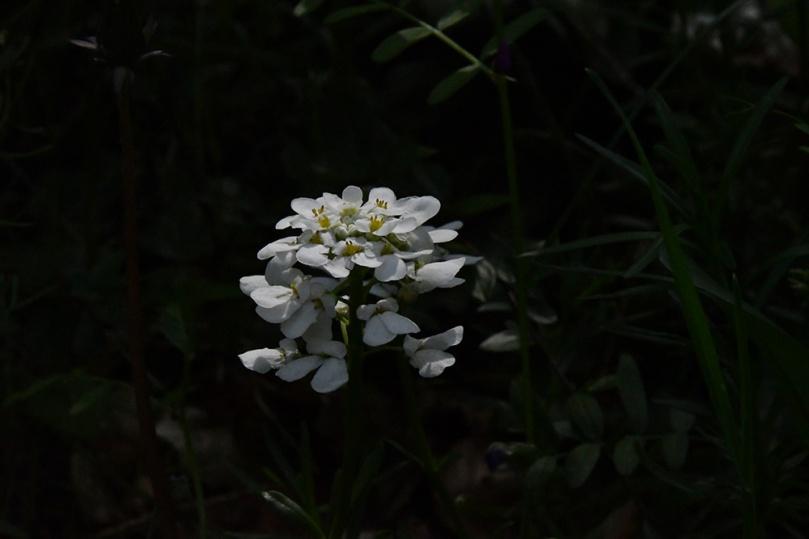 DSC_6517